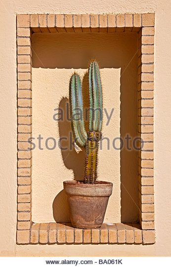 cactus in a clay pot in brick window frame - Stock Image