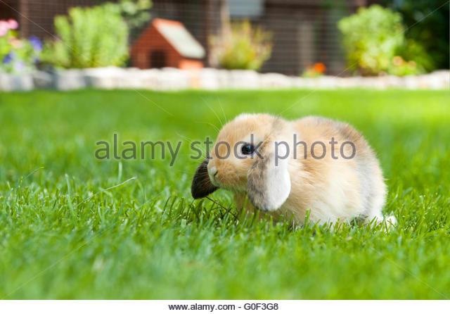 baby rabbit - Stock Image