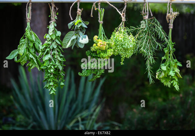 Herbs Drying Stock Photos & Herbs Drying Stock Images - Alamy
