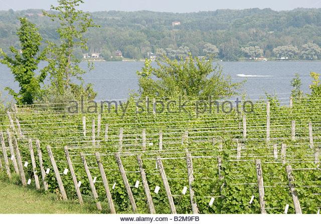 Michigan Traverse City Leelanau Peninsula Bel Lago Vineyard and Winery South Lake Leelanau vines grapes trellis - Stock Image