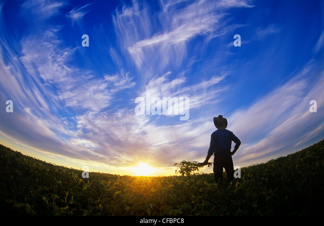 A farmer looks out over his maturing soybean crop at sunset near Lorette, Manitoba, Canada - Stock Image
