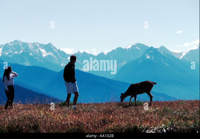 A man and woman watch a deer browse in a mountain meadow in Olympic National Park Washington in Sept COPYRIGHT DUANE - Stock Image