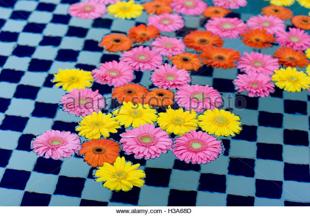 colorful flowers floating in a pool - Stock Image