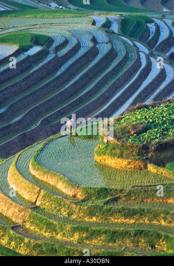 Landscape of water filled rice terraces in the mountain Longsheng Guangxi Province China - Stock Image