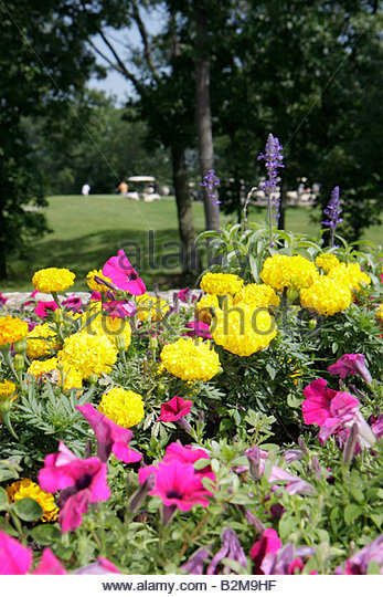 Wisconsin Kenosha Kansasville Brighton Dale Links golf course county park system garden yellow magenta flowers scenic - Stock Image