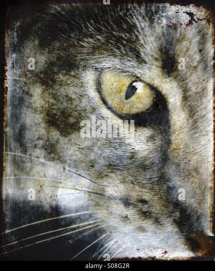 A closeup of a cat's eye. - Stock Image