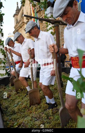 Sherry Harvest in Jerez , treading the grapes 'Fiesta de la  Vendimia ' Jerez de La Frontera each year in - Stock Image