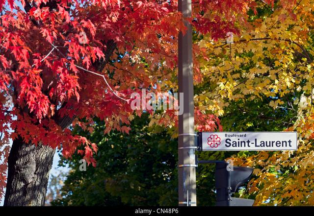 Canada, Quebec Province, Montreal, Boulevard Saint Laurent, Autumn foliage - Stock Image