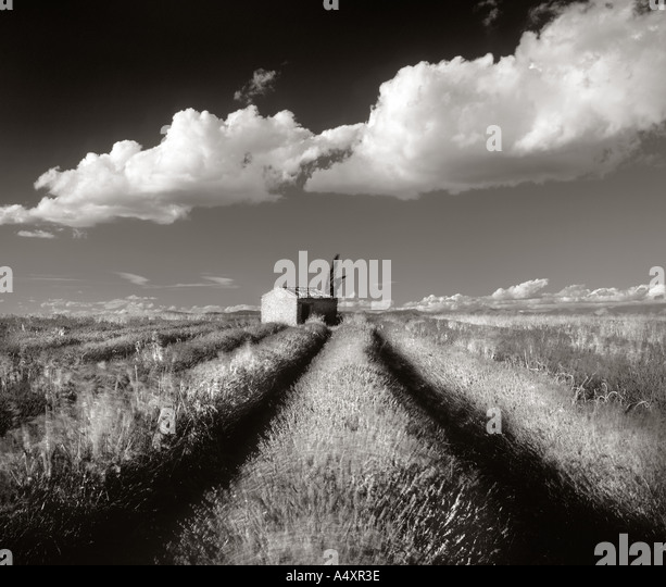 Lavender fields of Valensole Alpes de Haute Provence France Europe - Stock Image