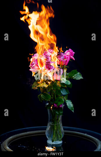 It's over!  Bouquet of pink roses in vase on fire for concept of ending a relationship - Stock Image