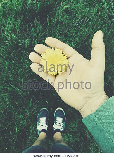 Directly Above Shot Of Man Showing Yellow Dandelion On Grass - Stock Image