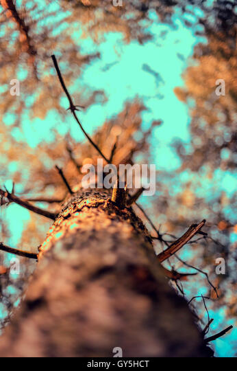 tree seen from below - Stock Image