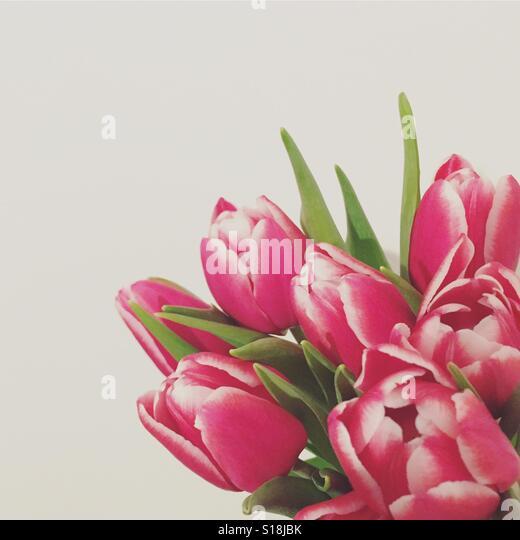 Pink tulips - Stock-Bilder