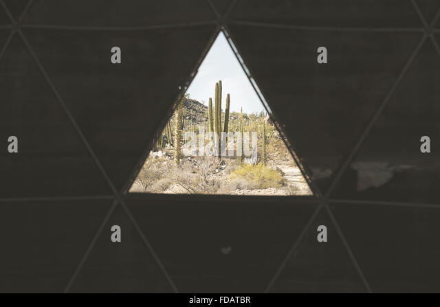 Looking out to see a cactus in the desert of Baja California - Stock Image