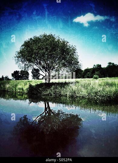 Tree and single cloud by canal - Stock Image