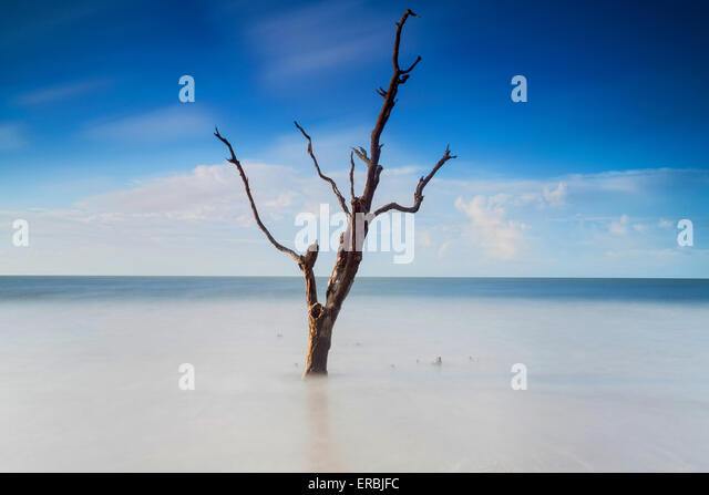 Early morning light over the boneyard beach at Botany Bay in Edisto Island, South Carolina. The Atlantic Ocean has - Stock Image