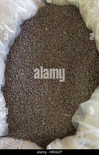 Mustard seeds - Stock Image
