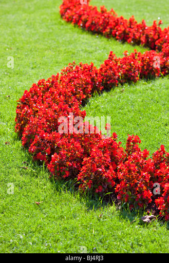 Lawn with flowers. Nature background. - Stock-Bilder