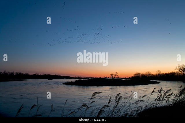 Sandhill cranes and other migratory birds fly over the Platte River at dawn - Stock-Bilder