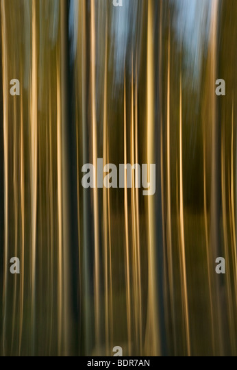 Abstract forest. - Stock Image