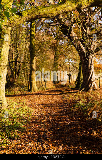 Autumn walk in the woods. - Stock Image