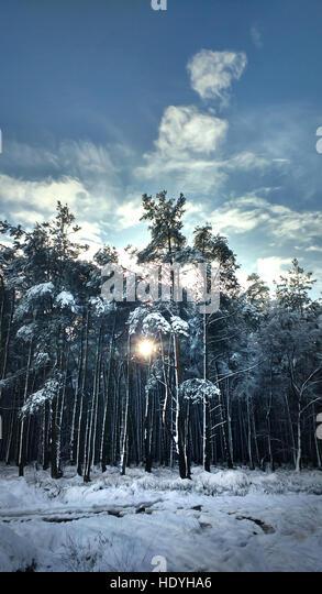 winter nature - Stock Image