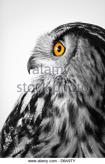 amazing close up photo of an eagle owl - Stock-Bilder