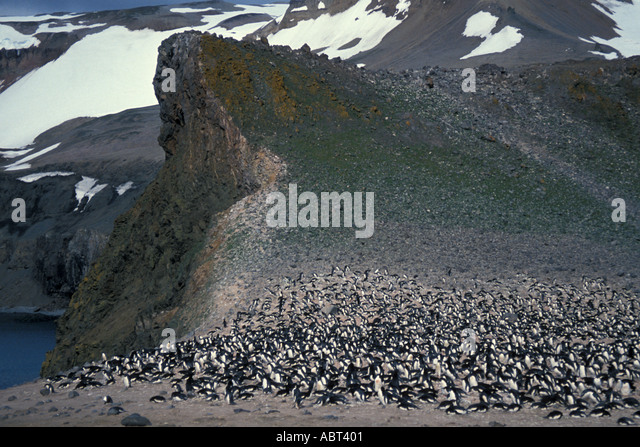 ANTARCTICA large Adelie Penguin rookery King George Island South Shetlands - Stock Image