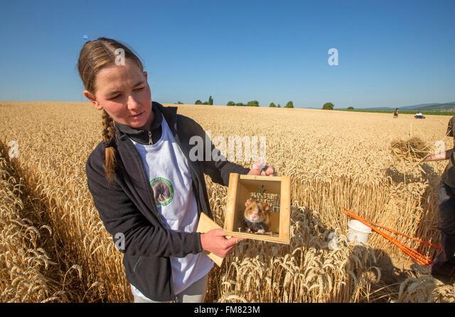 france-bas-rhin-griesheim-near-molsheim-