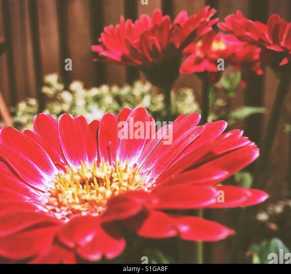 Garden bloom - Stock-Bilder