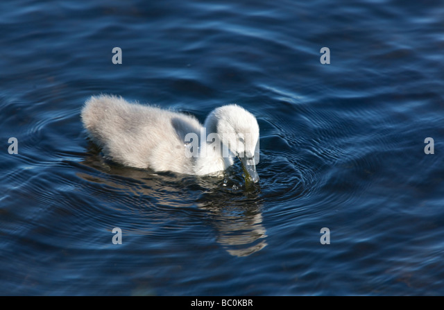 swan hindu singles Search form for global penfriends to find penpals and penfriends, just fill out the form and click on search.