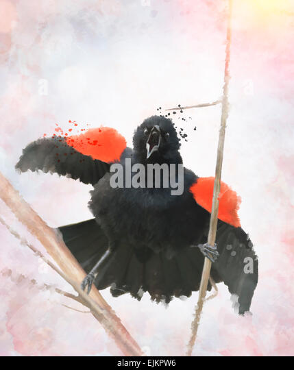 Digital painting Of Red Winged Blackbird - Stock Image
