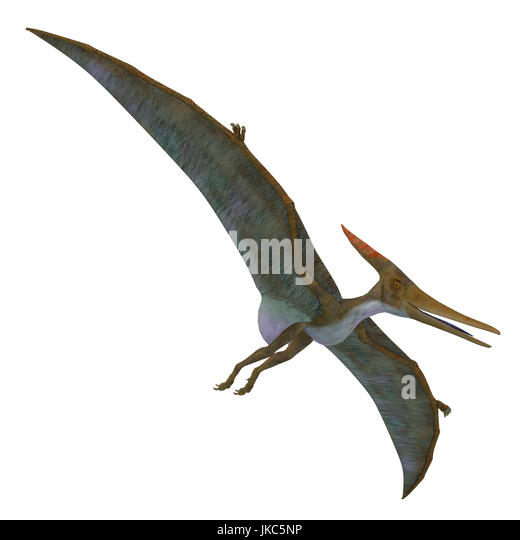 Pteranodon was a flying carnivorous reptile that lived in North America in the Cretaceous Period. - Stock Image