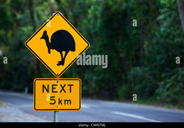 Cassowary crossing sign.  Daintree National Park, Daintree, Queensland, Australia - Stock Image