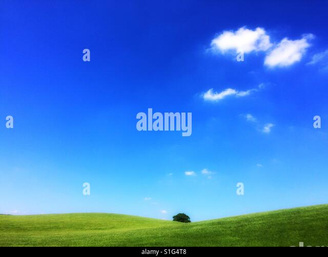 Field and tree - Stock-Bilder