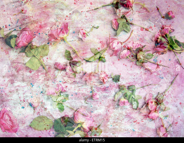 a poetic floral montage from pink roses on painted texture - Stock Image