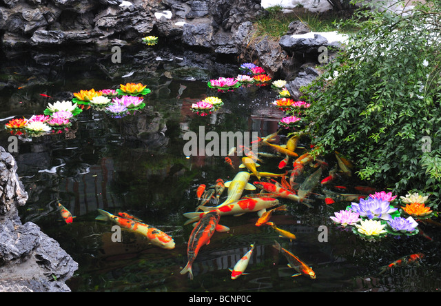 Japanese fishes stock photos japanese fishes stock for Ornamental pond fish port allen