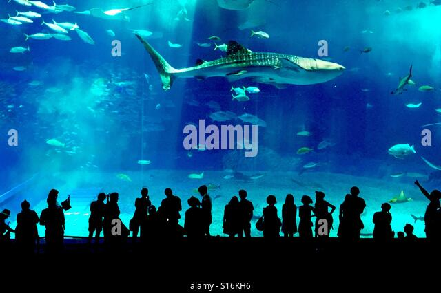 Silhouettes in the aquarium looking at a whale - Stock-Bilder