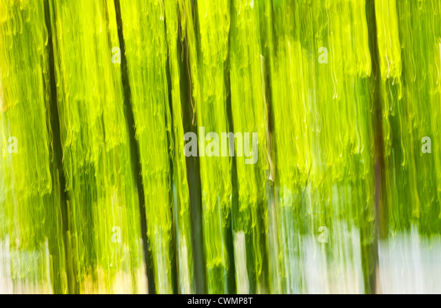 Abstract background of green forest produced by in-camera motion blur - Stock Image