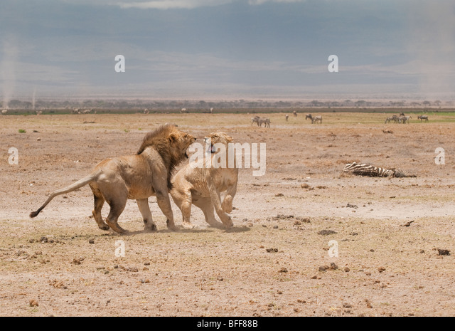 Dead Animals Drought Stock Photos & Dead Animals Drought Stock Images ...