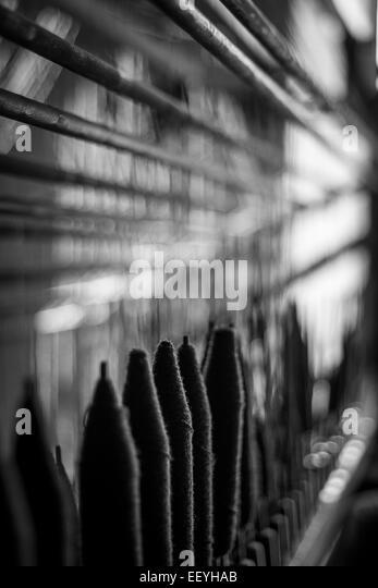 Sunlight weaves through the fine woollen threads - Stock-Bilder