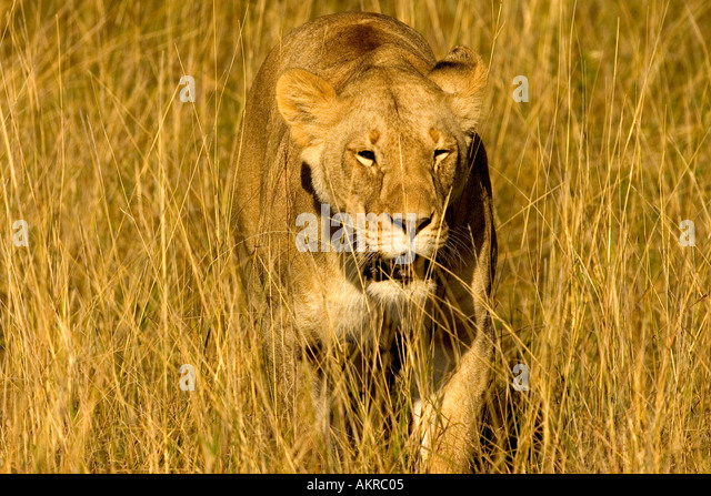 Long Fang Stock Photos & Long Fang Stock Images - Alamy