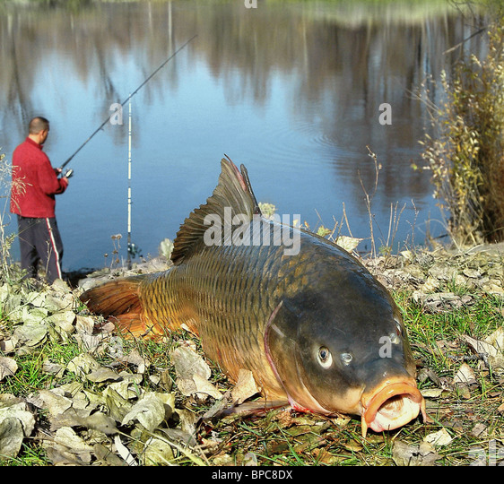Summer angling - Stock Image