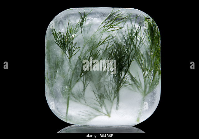 Frozen dill - Stock Image