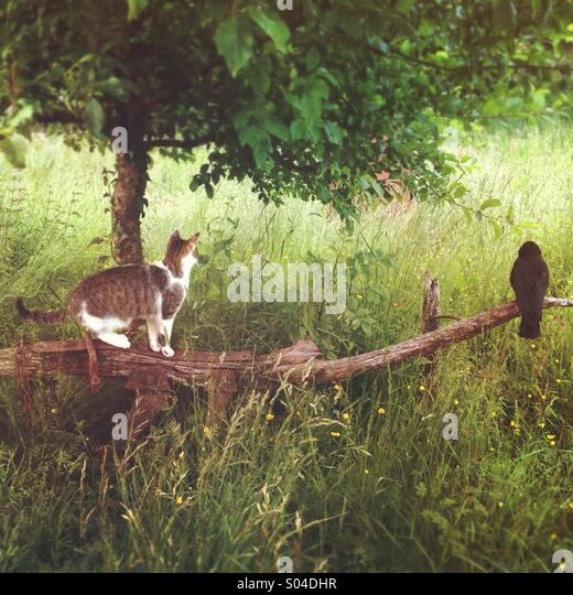 Cat stalking a crow sitting on an old plow in field - Stock-Bilder