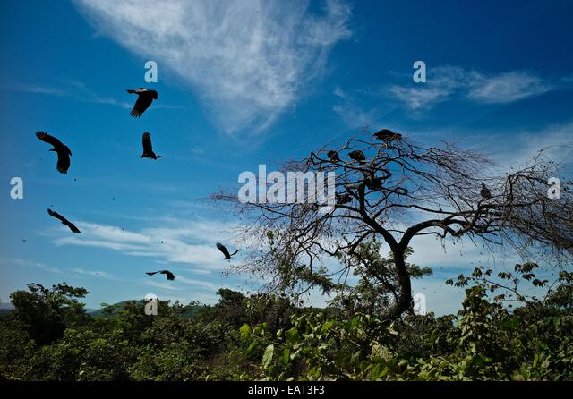 Vultures circle near the city dump in contrasting lush landscape. - Stock Image
