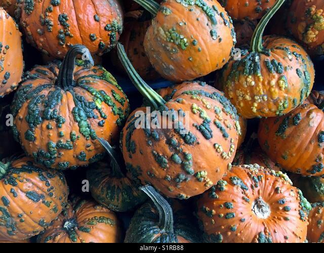 Warty Pumpkins - Stock Image