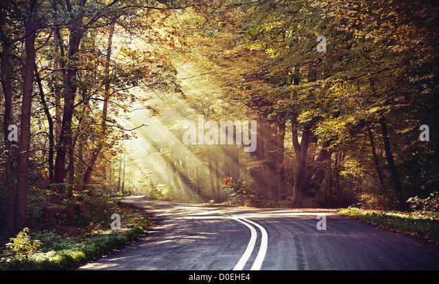 Great shoot of sunbeams above the road in the forest - Stock Image