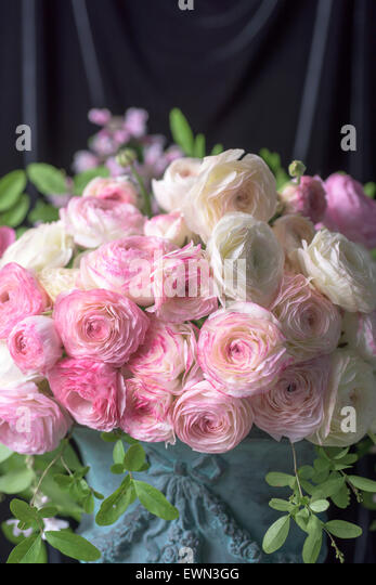 Bouquet of pink and white ranunculus in blue urn - Stock Image