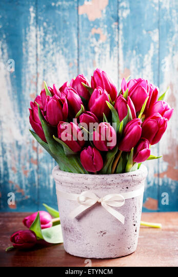 Purple Tulips on a wooden surface. Studio photography - Stock Image